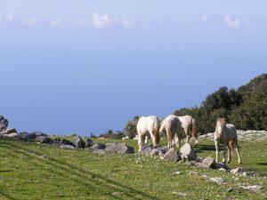 Horses-Aenos-Kefalonia